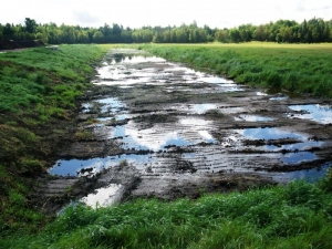 Bioremediation amendments