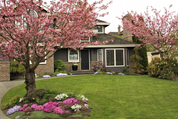 front of house flowering crab apple trees